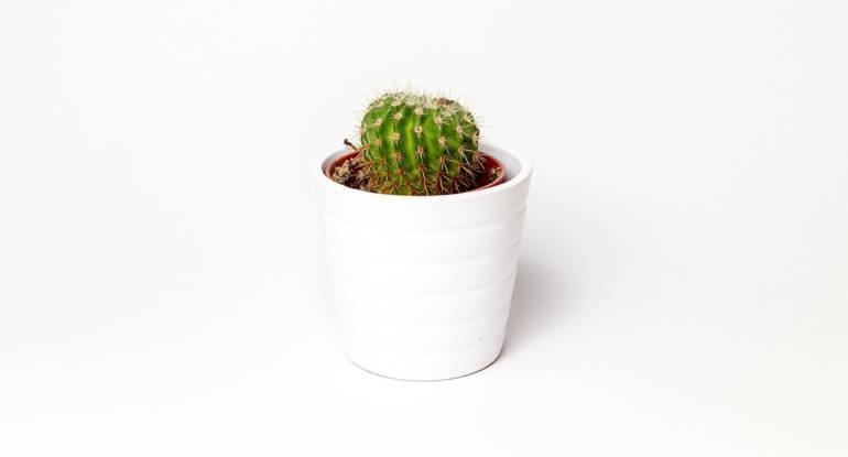 Minimalismus und Pflanzen?