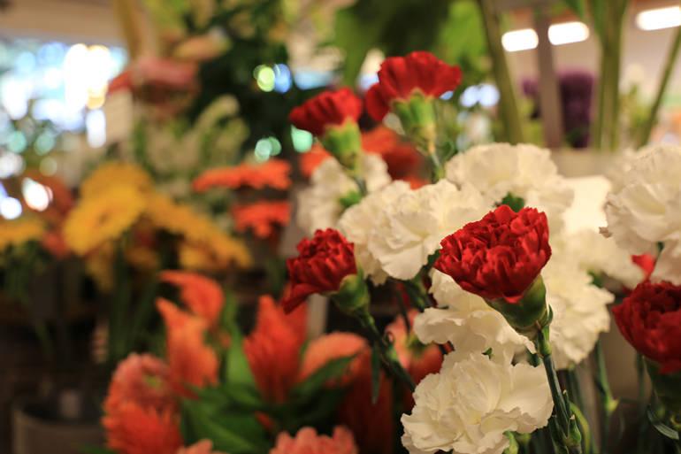 Blumensprache: Was Blumen sagen!