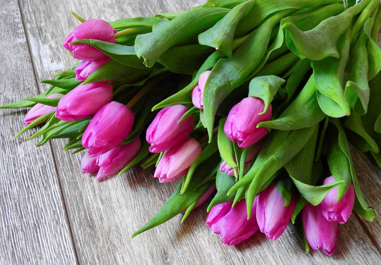 Blume des Monats Januar: die Tulpe!
