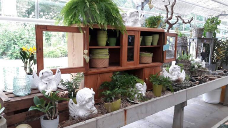 Grüne Büros: Pflanzen sorgen für gesunde Atmosphäre