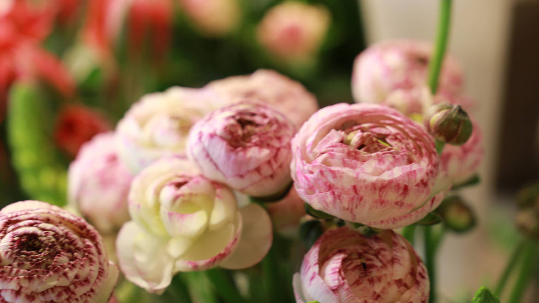 Rosa & Grün:  Der Blumentrend im Frühling