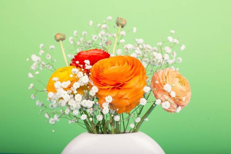 Blume des Monats März: die Ranunkel