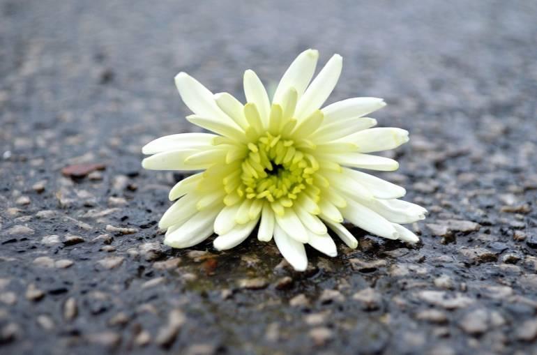 Blumen als Statement?