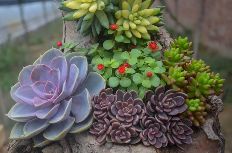 Sukkulenten: Pflanzen für jedermann